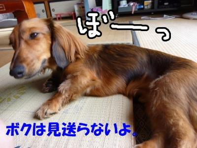 8_17+239_convert_20110821210140.jpg