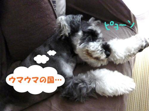 8_2+045_convert_20110803090847.jpg