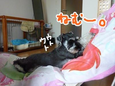 8_21+011_convert_20110822182701.jpg