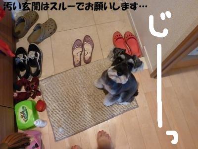 8_21+047_convert_20110822181934.jpg