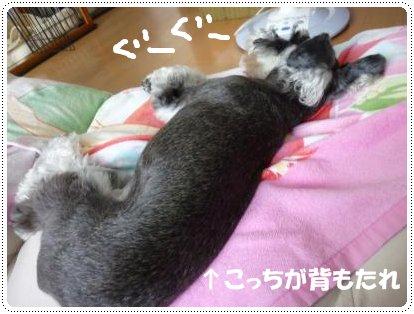 8_26+005_convert_20110829120447.jpg