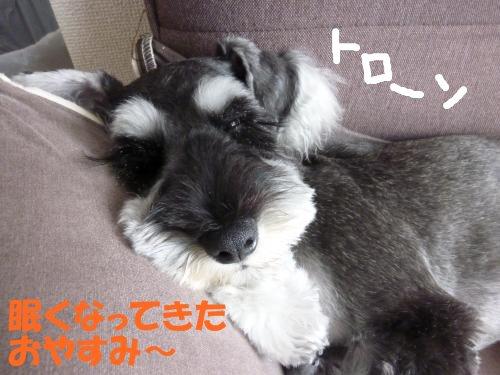 8_26+044_convert_20110826151411.jpg