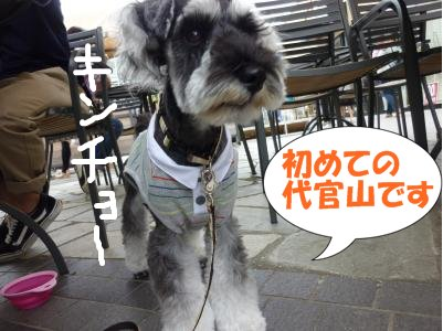 8_28+032_convert_20110828090639.jpg