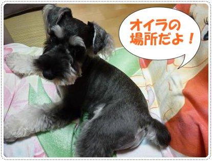 8_29+014_convert_20110829120113.jpg