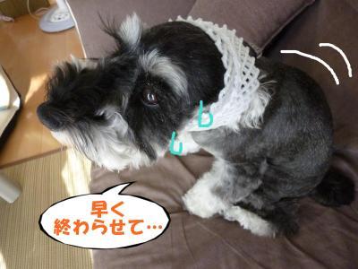 8_4+009_convert_20110804121618.jpg