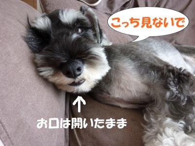 9_2+007_convert_20110902092836.jpg