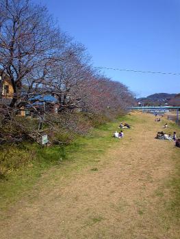sakura-festa (3)