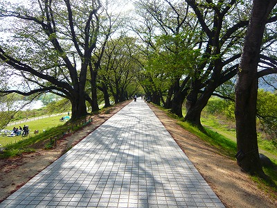 20.4.20公園 (1)