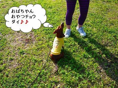 20.4.20公園 (3)