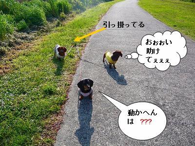 20.4.20公園 (4)