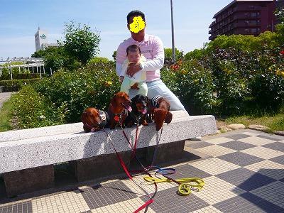 20522ばら公園三木 (1)