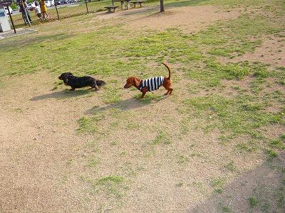 20522ばら公園三木 (3)