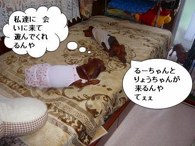 20731るーちゃん
