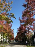 2008. 10 28  城西国際大学 風景画 006_R