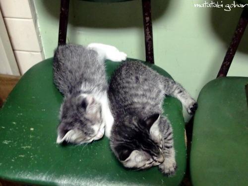 チビ猫兄弟