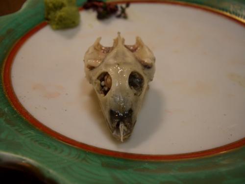 すっぽん頭蓋骨