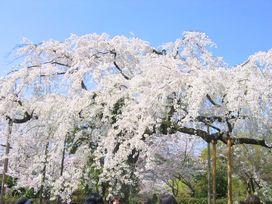 IMG_2194(京都)3