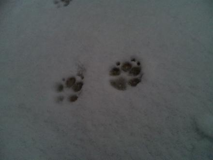 snow-in-tokyo2.jpg