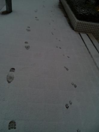 snow-in-tokyo3.jpg