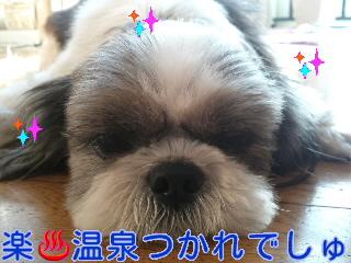 2012.3.28楽ちゃん