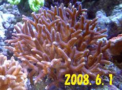 20080601toge.jpg