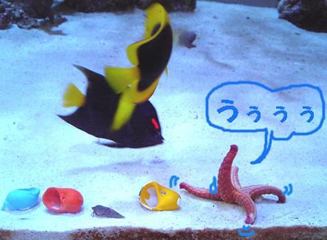 20080705staryakko.jpg