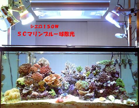 20080831post3.jpg
