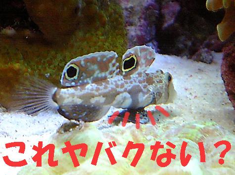 20081113kani2.jpg