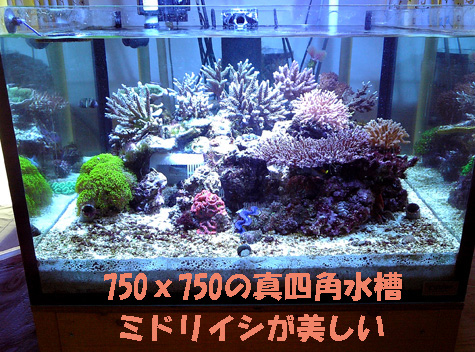 20081117bisya2.jpg