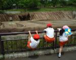ゾウと猿達