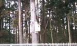 林の中に・・・