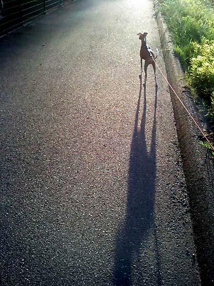 07-0917散歩 かげ