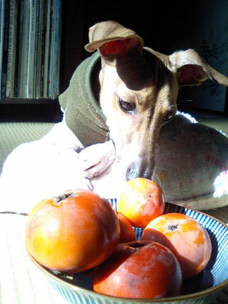 初物ー柿 (4)