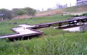 枚方淀川河川敷公園ー (3)