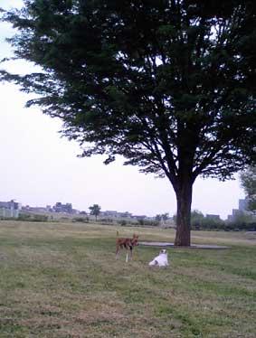 枚方淀川河川敷公園ー (13)