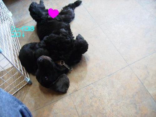 pujyairo1032_convert_20091003103606.jpg