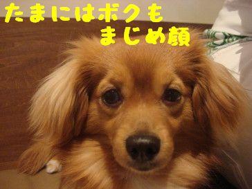 DSC012550055.jpg