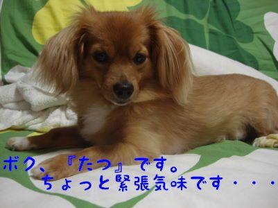 DSC032190055.jpg
