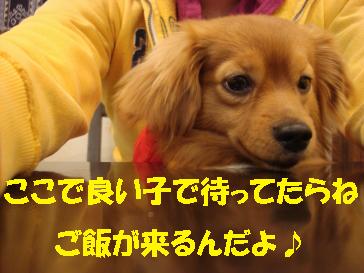 DSC03623001682CC83R83s815B.jpg