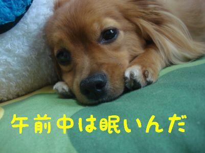 DSC043590055.jpg