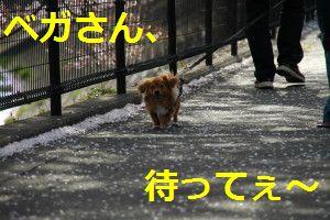 DSC_2979_JPG0055.jpg
