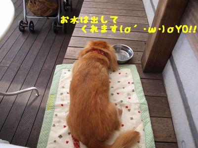 P71131630055.jpg