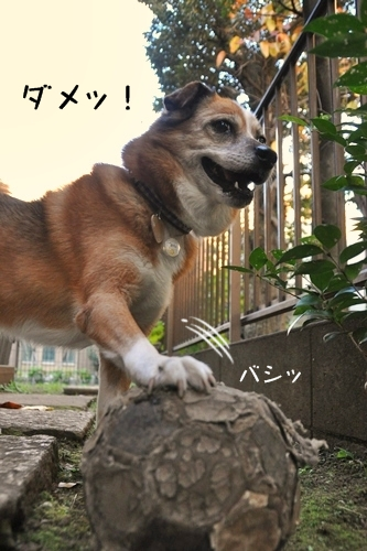 076_20111124192523.jpg