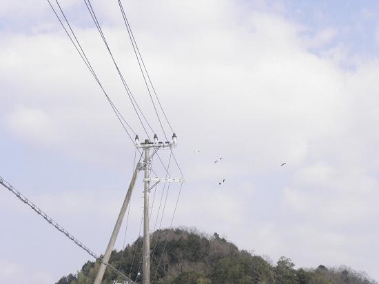 コウノトリ4羽 カメラ設定ミスでトホホの写真です。
