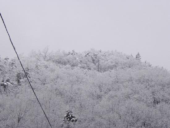 雪の朝 7時半ごろ