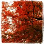 autumnleaves02.jpg