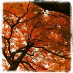 autumnleaves03.jpg