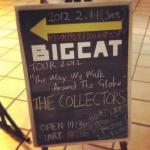 bigcat.jpg