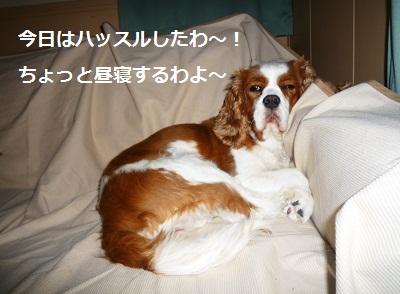 2011_0716_175241-P1100827.jpg