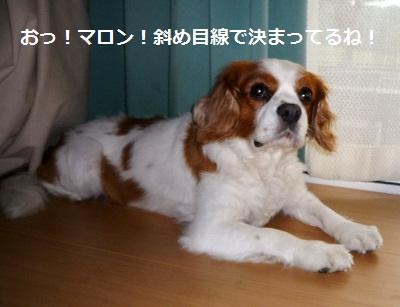 2011_0716_175257-P1100829.jpg
